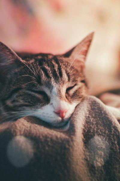 Mon Chat a la Grippe : Que Faire ?
