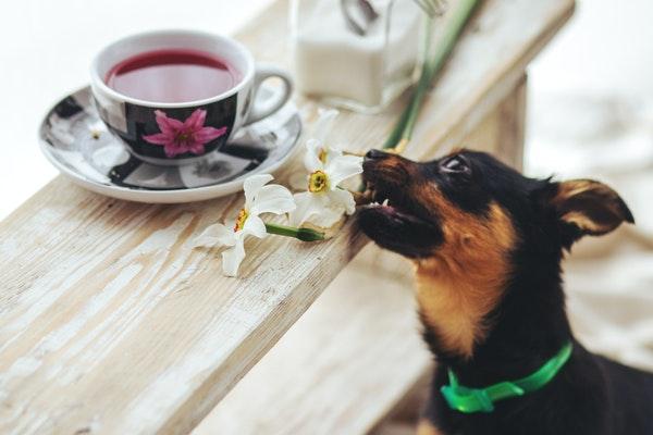 Aliments toxiques pour animal de compagnie : quels sont-ils ?