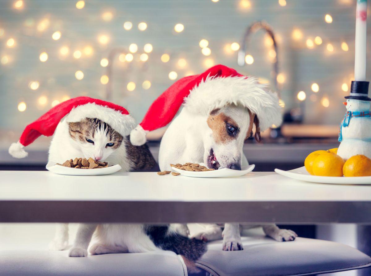 DIY : 4 Recettes de Noël naturelles pour chien et chat