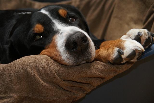 Le rhume du chien : comment le soigner efficacement ?