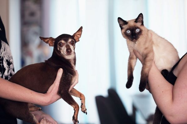 2021 : L'Année des S pour le nom des chiens et chats