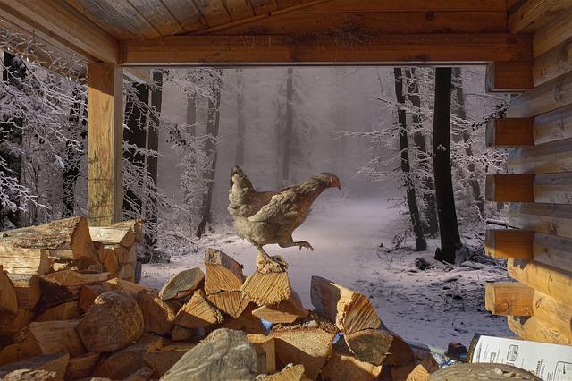6 Conseils pour protéger les poules l'hiver