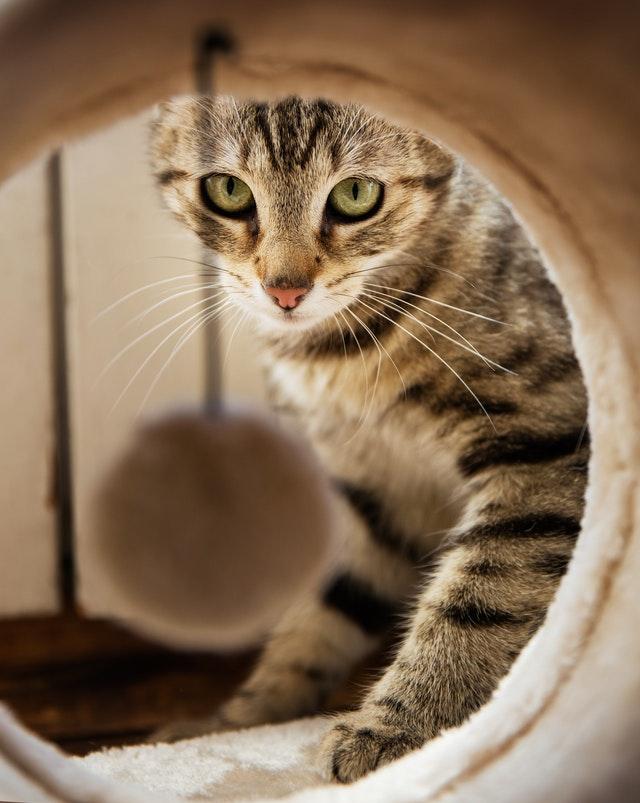 DIY Meuble Litière : 9 idées pour cacher la litière de mon chat