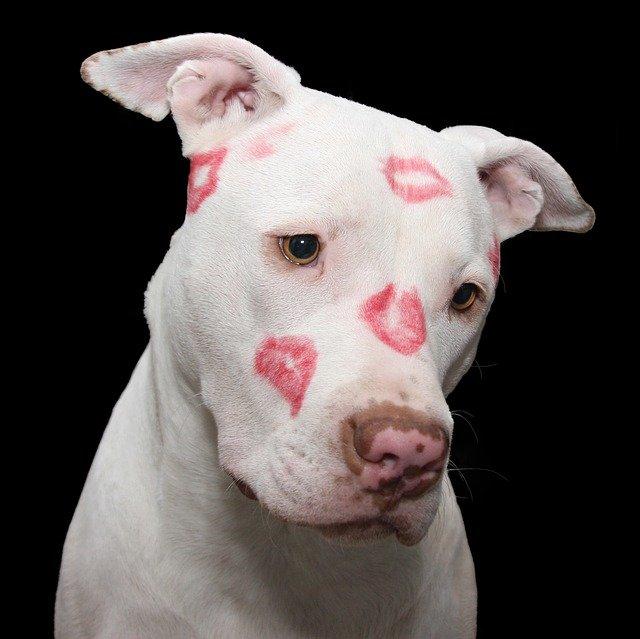 DIY Saint-Valentin : 9 façons d'aimer son chien adoré