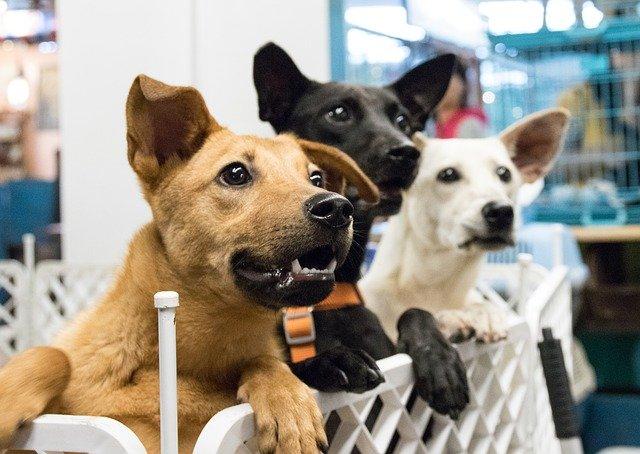 ACTU : Vente de chien et chat interdite en animalerie