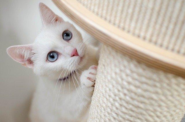 DIY : 9 idées pour jouer avec son chat