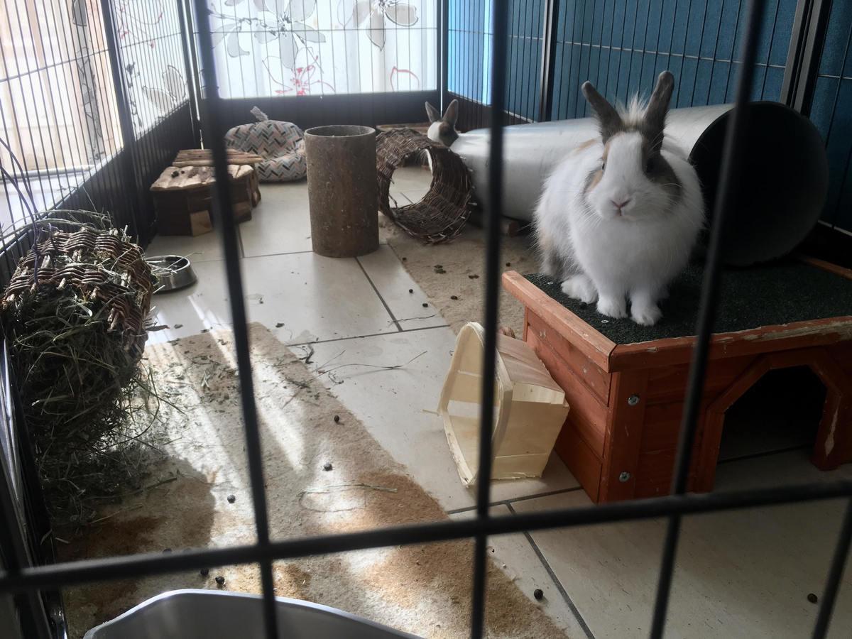 Enclos pour lapin : 9 idées pour bien l'aménager