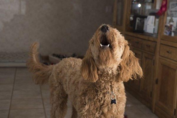 Comparatif collier anti aboiement pour chien 2021 : nos 7 best-sellers !