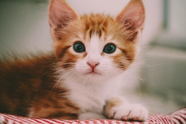 Comment nourrir un chaton ? 7 Conseils à retenir !