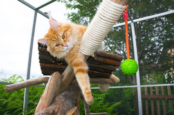 Catio : 7 conseils d'experts pour aménager un patio pour chat