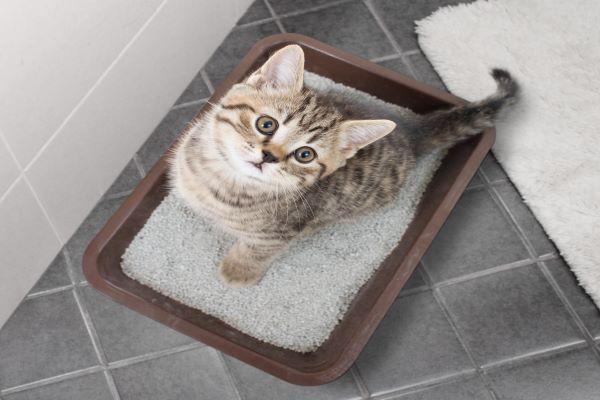 Où jeter la litière biodégradable du chat ? 5 façons de la recycler