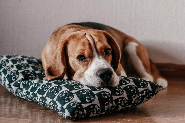 Comment occuper son chien lorsqu'on est absent ? 5 Astuces !