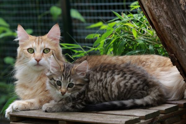 DIY : 11 idées pour fabriquer un enclos extérieur pour chat
