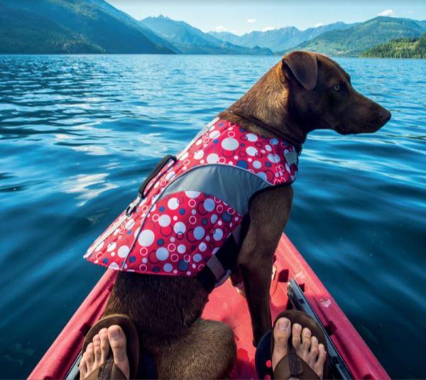 Vacances avec son chien : 87 % des maîtres partiront avec !