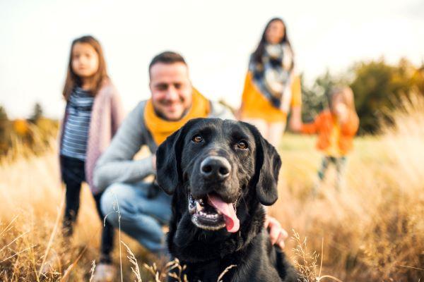 Booster l'espérance de vie d'un chien : 7 conseils d'experts