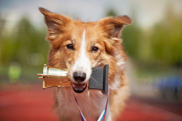 Quels Sports Canins choisir pour mon chien ?