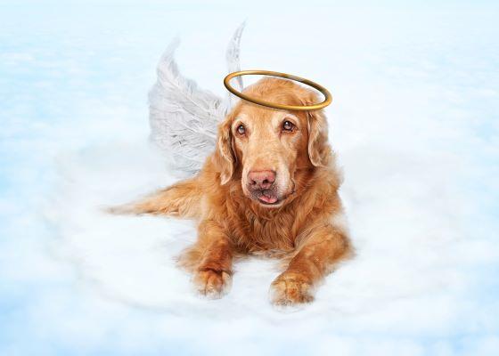 Vivre un deuil animal : 6 conseils pour vous aider à le surmonter