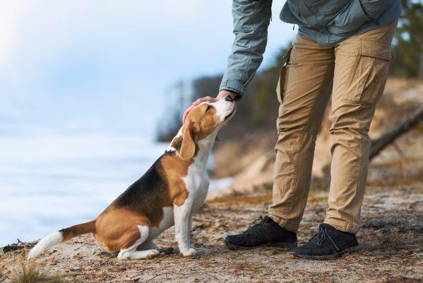 Renforcement positif du chien : comment mieux l'éduquer ?