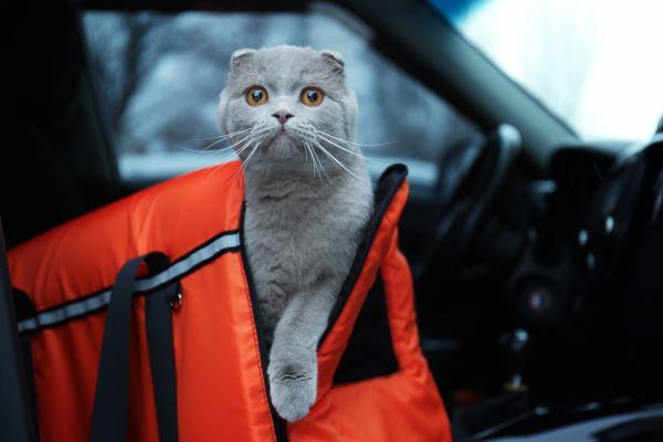 DIY : Comment calmer un chat en voiture ? 7 bons gestes