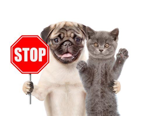 Non à l'abandon des animaux ! Projet de loi anti-maltraitance