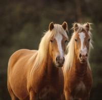 Les problèmes de peau du cheval