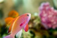 5 étapes pour installer son aquarium