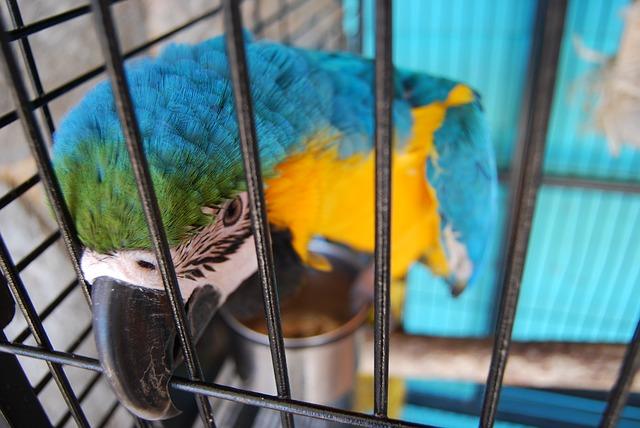 Cage pour perroquet : Comment la choisir ?