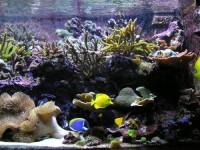 L'aquarium d'eau de mer