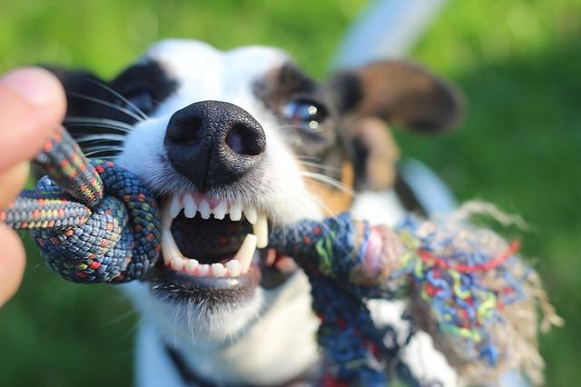 Avec Oravet, préservez l'hygiène bucco-dentaire de votre chien !