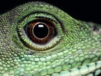 Nourrir mon reptile