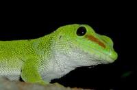 Faire l'acquisition d'un reptile