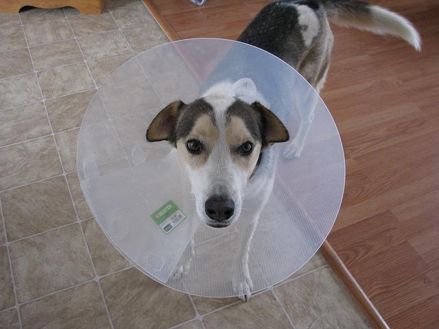 La trousse de premiers secours de mon animal