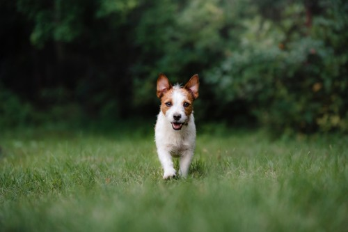 Quel collier anti-aboiement pour un petit chien ?