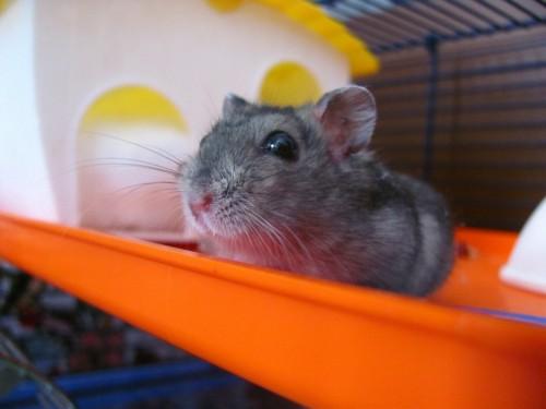 Comment bien aménager la cage de son hamster ?