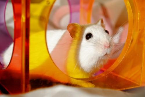 Quelle cage choisir pour mon hamster ?