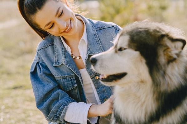 Comment faire en sorte que mon animal ne souffre pas de la canicule ?