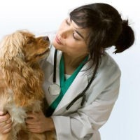 Pauline, étudiante vétérinaire nous a rejoint !