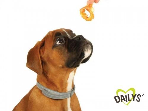 Friandises Dailys : un délice pour votre chien au quotidien