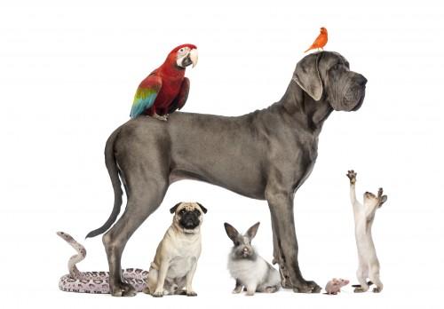 Le 04 octobre, Zoomalia célèbre la Journée mondiale des animaux !