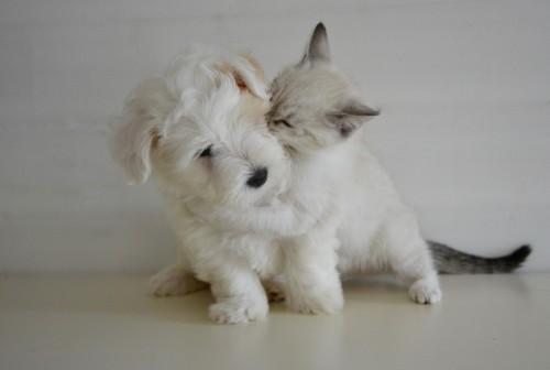 Le classement des prénoms de chiens et chats les plus donnés en 2017