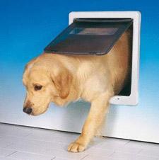 Chatiere pour chien electronique animalerie