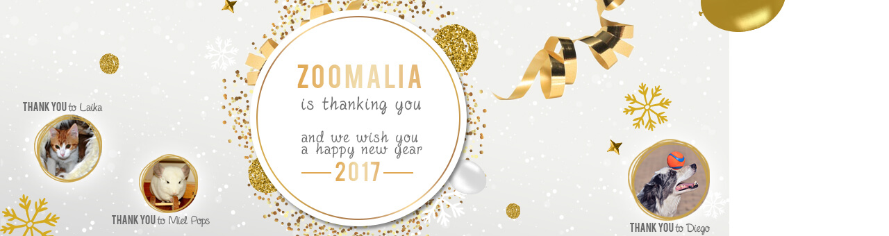 zoomalia is thanking you