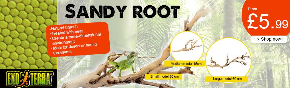 sandy root