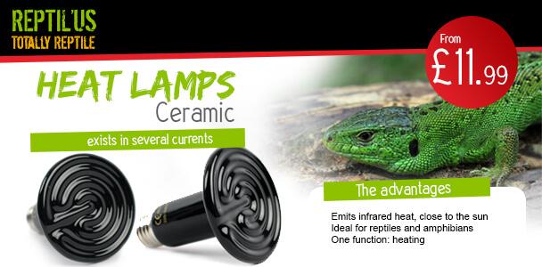 Ceramic heat lamp