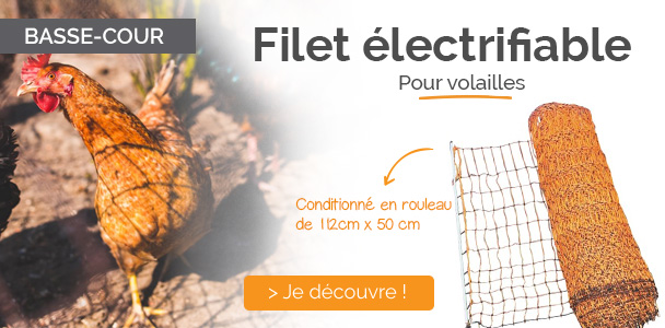 Filet volaille
