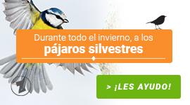 Durante todo el invierno, a los pájaros silvestres ¡Les ayudo!
