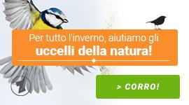 Per tutto l'inverno, aiutiamo gli uccelli della natura!