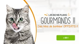 bon plan pet food