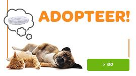 Saison adoption