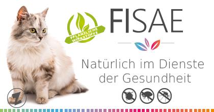 branding fisae